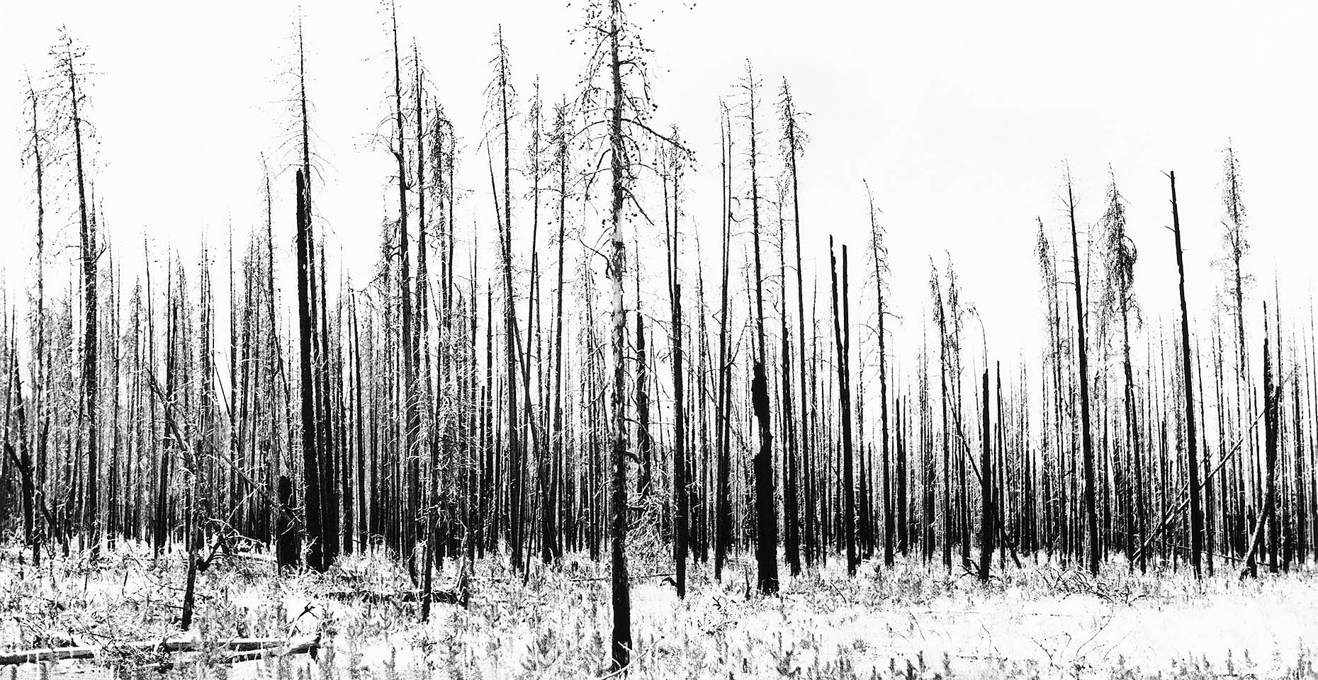 Burnt_Forest sharp0.3 1860px 07