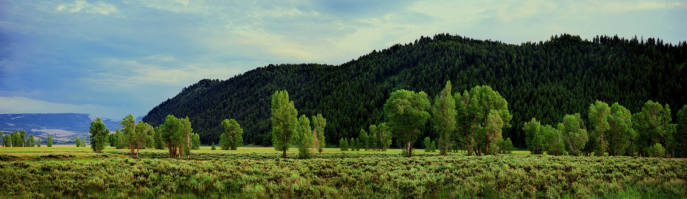 Wyoming_TreeLine sharp0.3 2231px 07